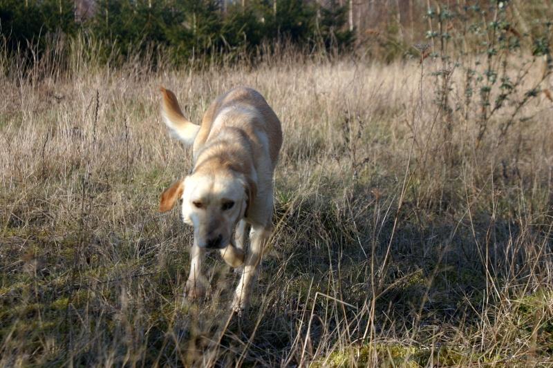 GIACOMO, M-Type labrador, né 2013 (REAA) - Pris en charge Association ANIMALS RESCUE (Belgique) - Page 6 Img_5218
