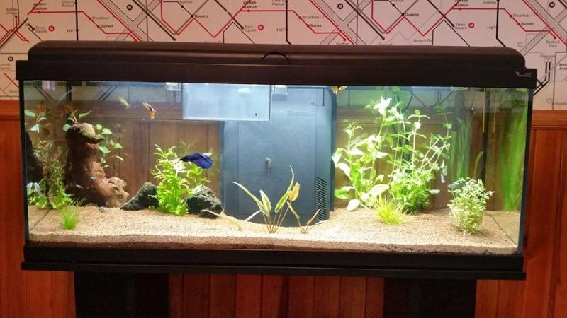 Lancement 115 Litres  Aquari10