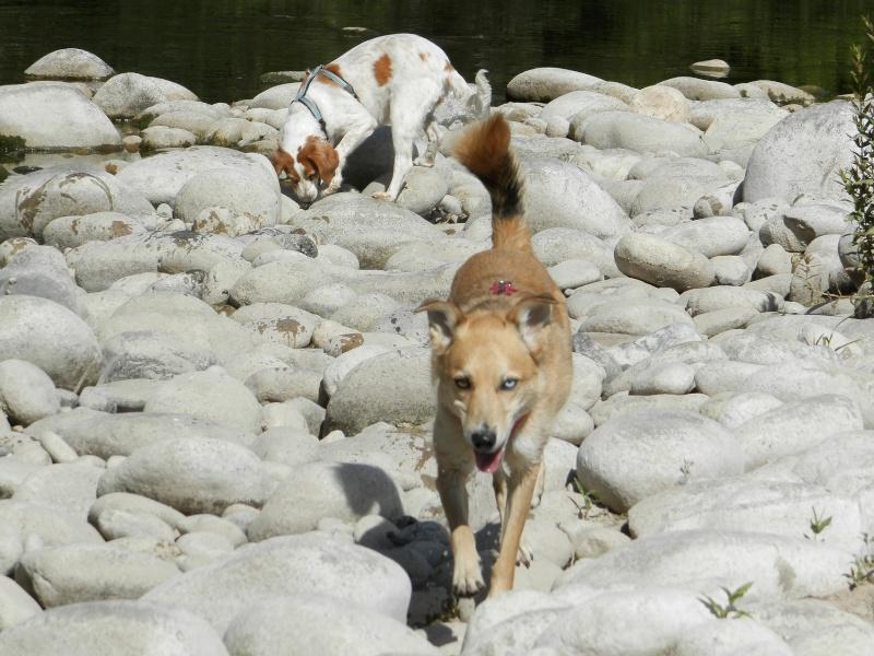 Présentation de Sacha, chien de 6 ans à donner contre BONS SOINS P6210810
