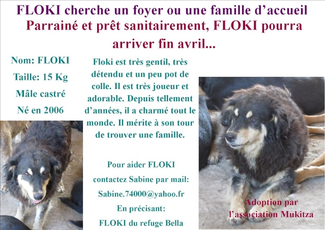 FLOKI, M-X Colley, né 2006, 15 kg - Il est extraordinaire (BELLA) - En FA Takine40 (départ40) Fiche_10