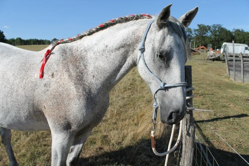 Estimation de nos chevaux ! - Page 3 20616510