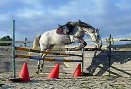 Estimation de nos chevaux ! - Page 3 69864_10