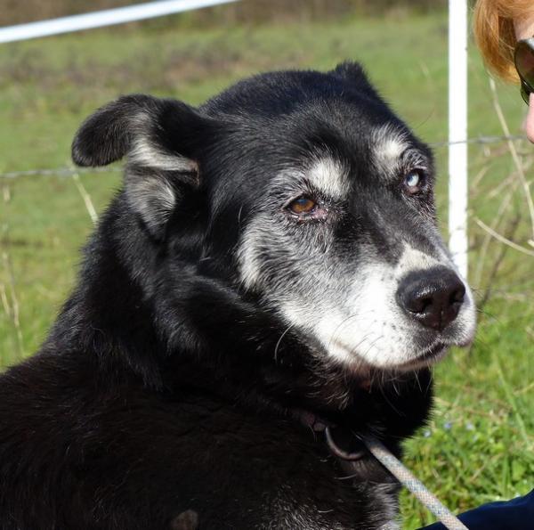 Adoc Husky 02/2006 REFU44 Adoc_510