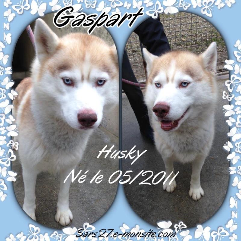 Gaspart, Husky roux REFU27 Gaspar10