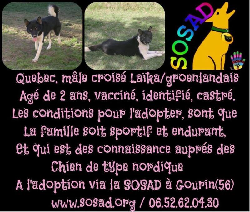 Québec x Groenlandais 2 ans ASSO56 ADOPTE Quybec10