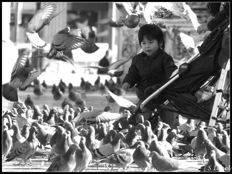 Enfants et pigeons P1120512