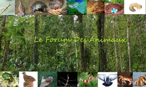 Le forum des animaux