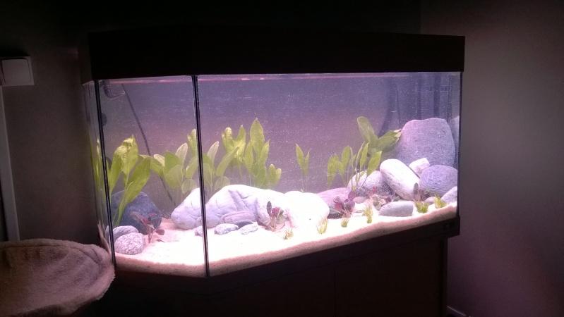 Mise en eau de mon aquarium Wp_20125