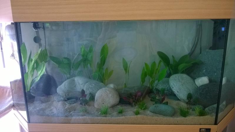 Mise en eau de mon aquarium Wp_20128