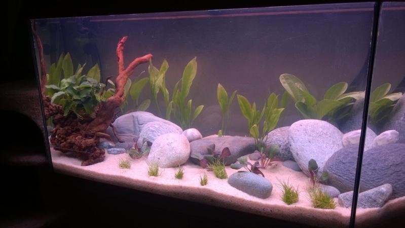 Mise en eau de mon aquarium Wp_20129