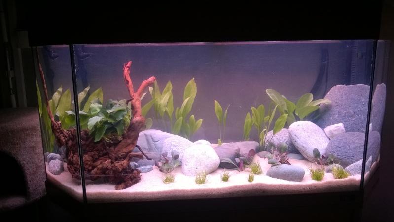Mise en eau de mon aquarium Wp_20130