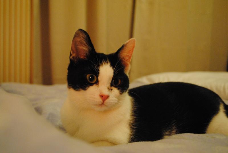 Livy, femelle, 10.05.2015, noir et blanche Dsc_1614