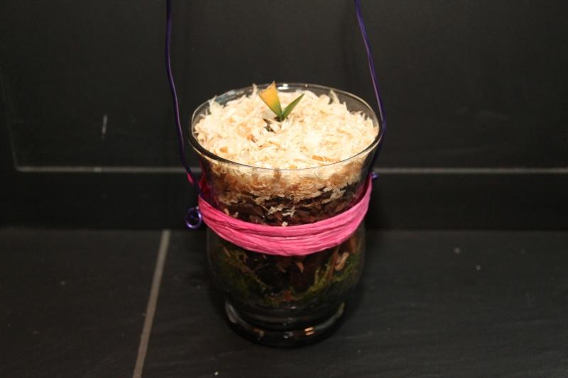 Orchideen in Glasvasen 5 (SGK) Img_9419
