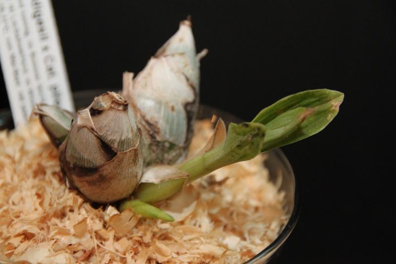 Orchideen in Glasvasen 5 (SGK) Img_9421