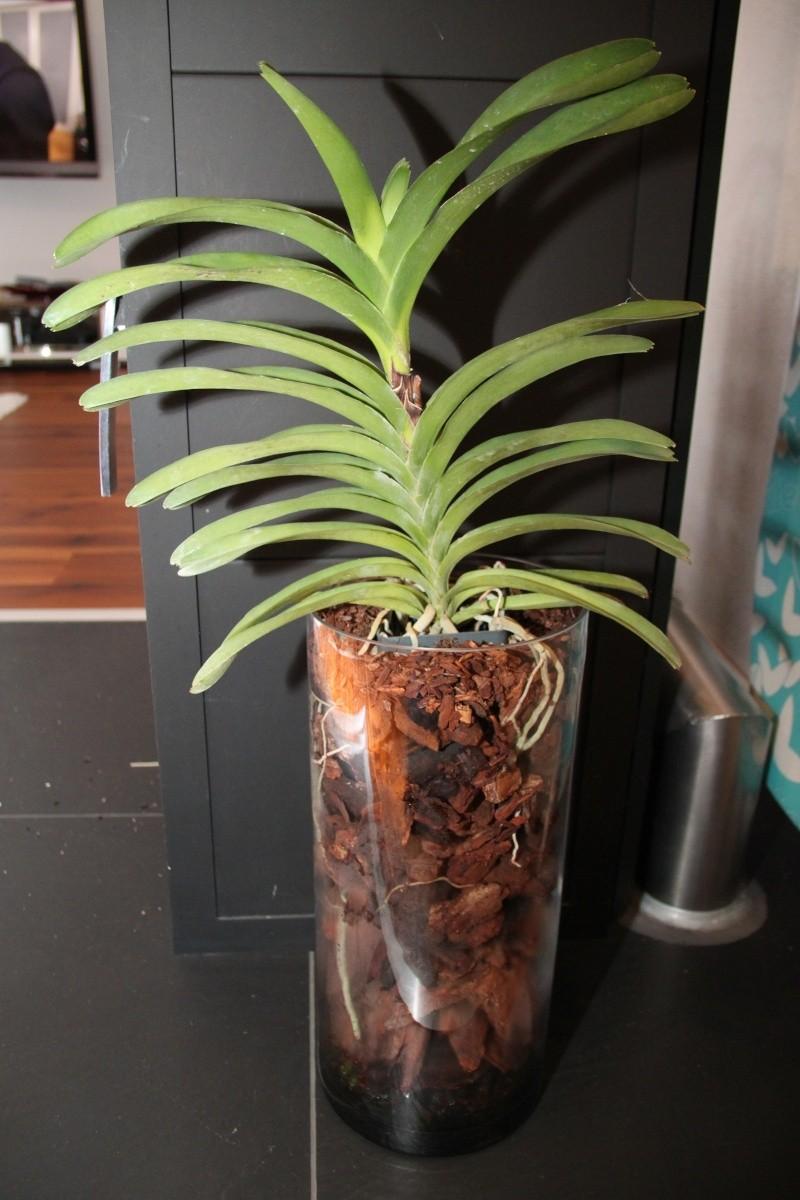 Orchideen in Glasvasen 5 (SGK) Img_9424