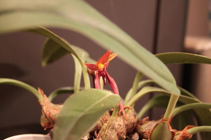 Orchideen in Glasvasen 5 (SGK) Img_9426
