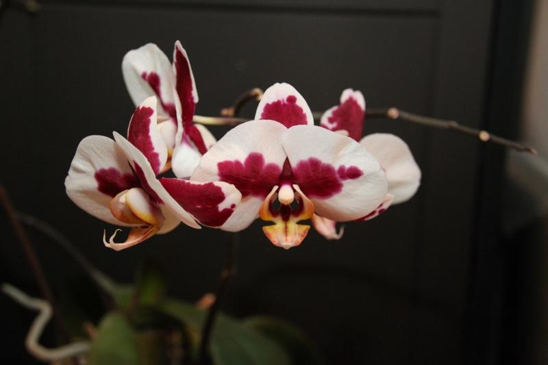 Orchideen in Glasvasen 5 (SGK) Img_9427