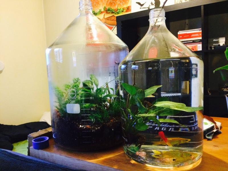 Projet terrarium en bouteille scientifique de 20l ou 10l Image12