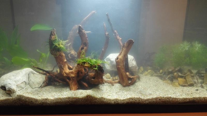 Découverte Aquariophilie 60L  Img_2012