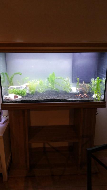 Mon premier aquarium (243L) 20160310