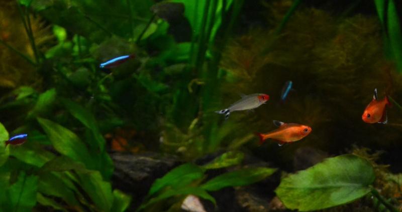 mon premier aquarium : 115L Dsc_0012