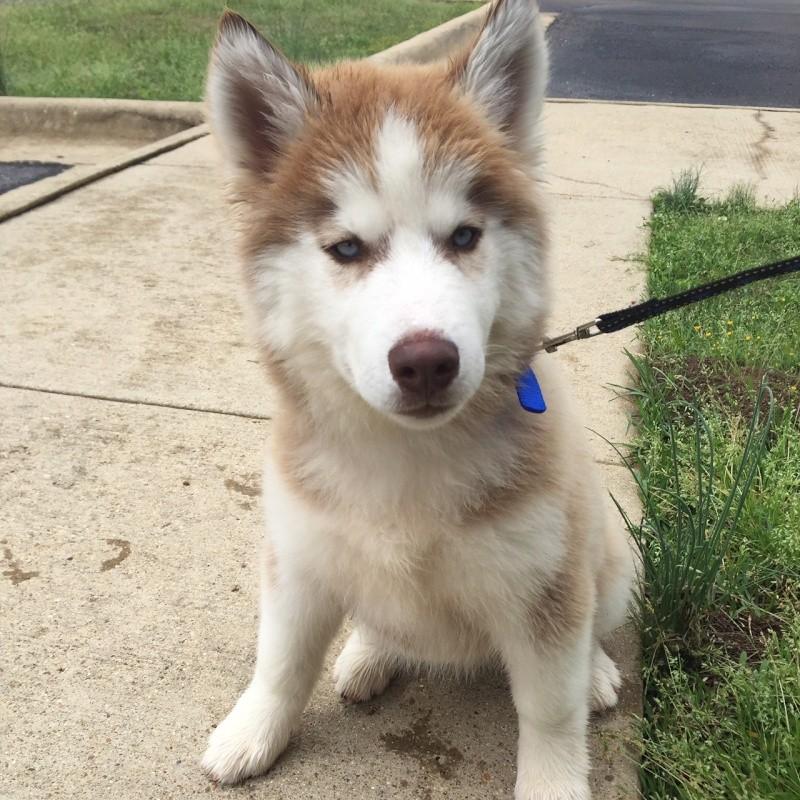 Meet Loki From Oklahoma Image110