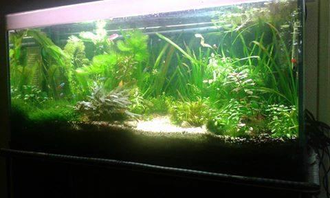 plantes qui meurt ou végète  11880610