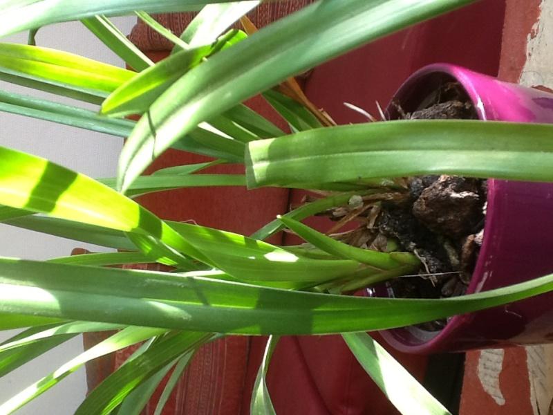 Qu'elle est cette orchidée 014c8212
