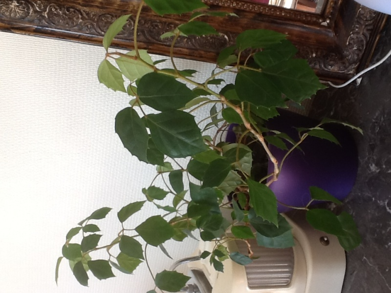Qu'elle est cette plante 10acf211