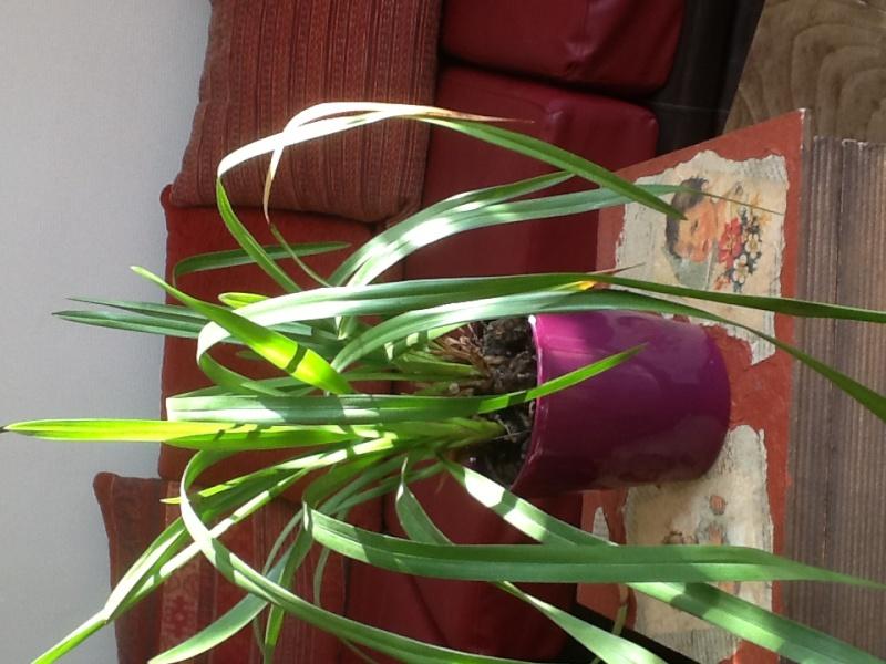 Qu'elle est cette orchidée 1a059c11