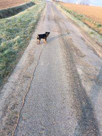 JUSTY (croisé jagd terrier noir et feu) 12595910