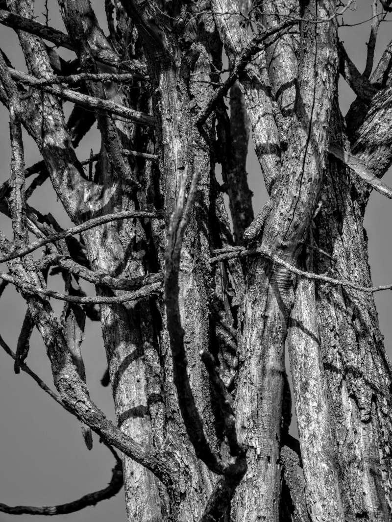 Troncs d'un arbre mort Arbre_10