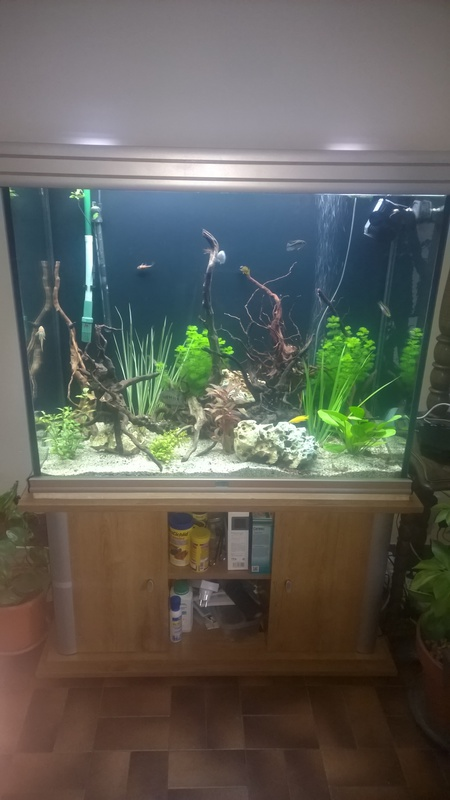 aquarium aquavisio vision xl 400L Bloggi20
