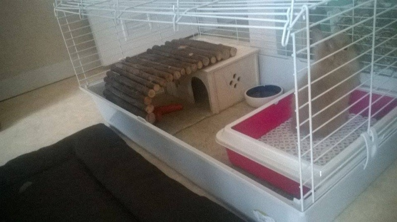 Vos cages et installations - Page 41 12499010