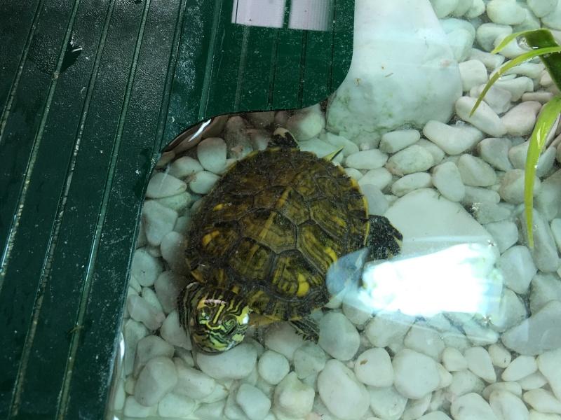 Renseignement pour le nouveau logis de ma tortue 2016-014