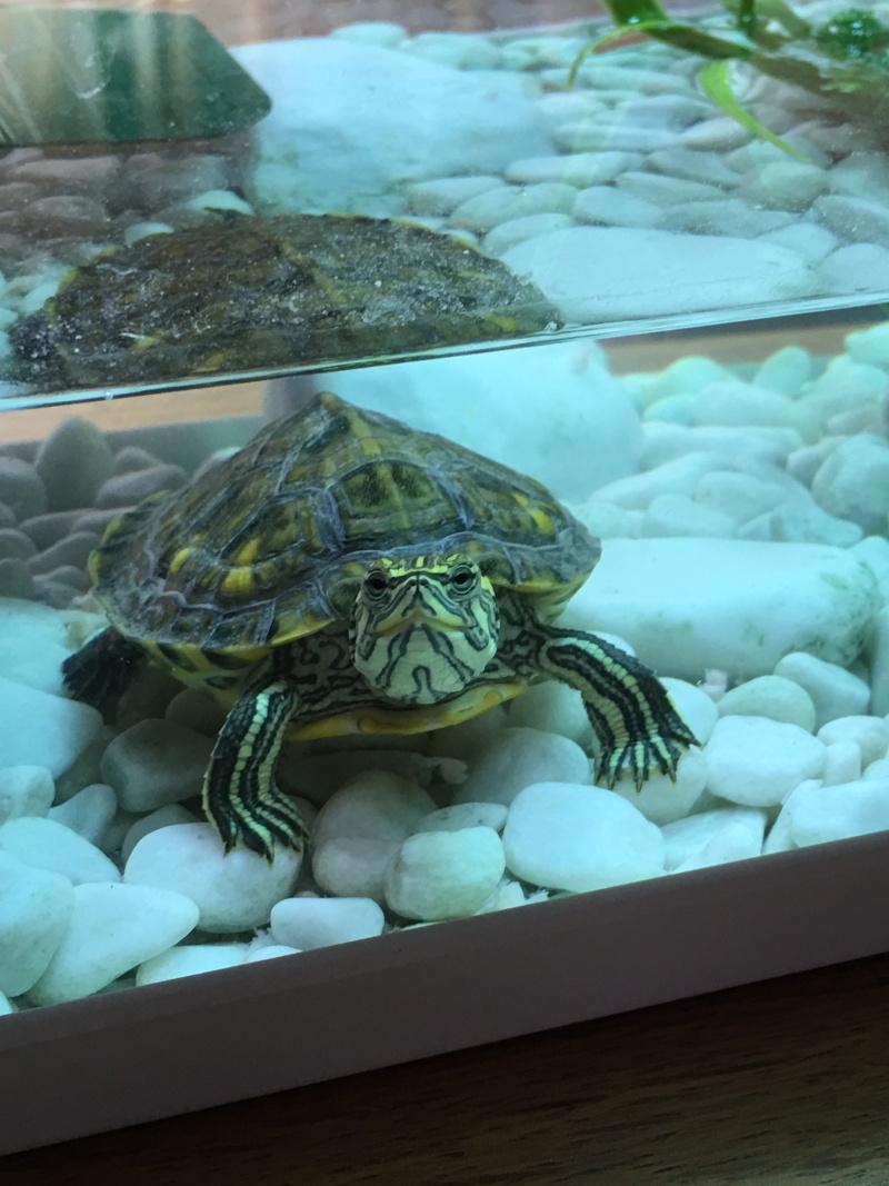 Renseignement pour le nouveau logis de ma tortue 2016-015