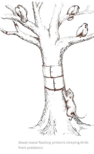 Poulailler expérimental en forêt avec races farouches Captur10
