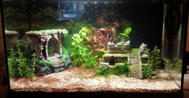 mon aquarium 20160311