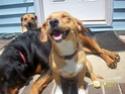 Let's see your pets! Pup_la10