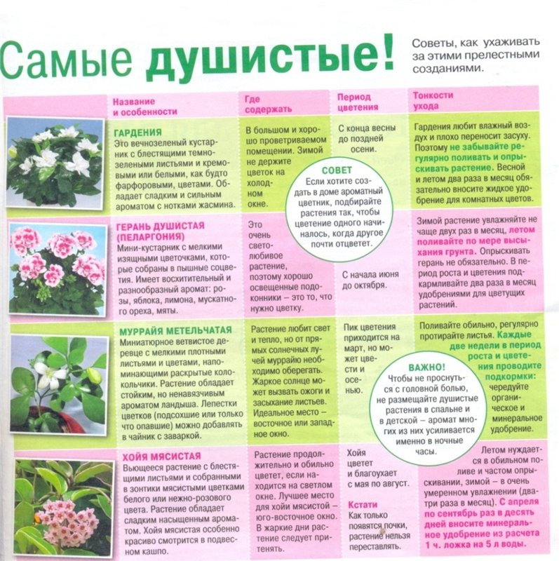статьи о растениях из  газет и журналов 0130f010