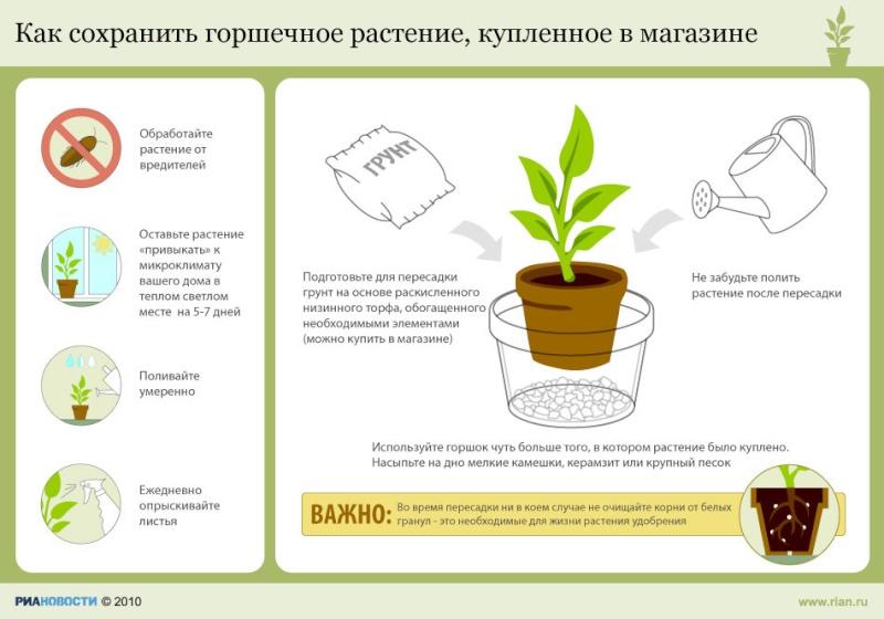 статьи о растениях из  газет и журналов 12997210