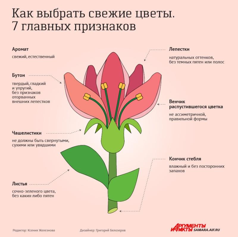 статьи о растениях из  газет и журналов 157a0c10