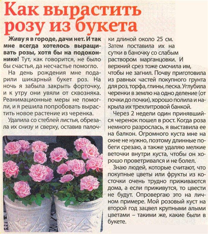 статьи о растениях из  газет и журналов 1d658310