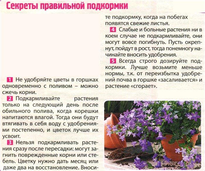 статьи о растениях из  газет и журналов 1ec5b410
