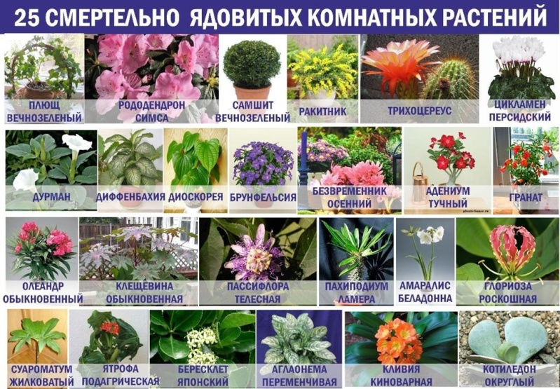 статьи о растениях из  газет и журналов 48098710