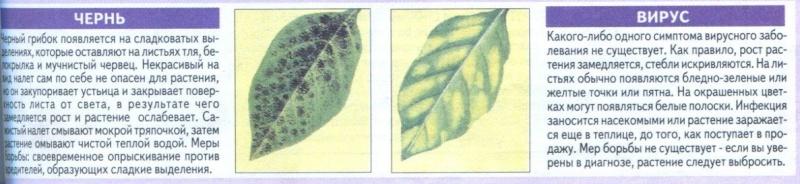 Болезни комнатных растений 5iljv-10