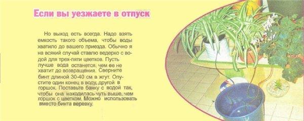 статьи о растениях из  газет и журналов 6b2b0e10