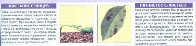 Болезни комнатных растений 6qh0uf10