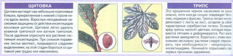 вредители комнатных растений 71ktlu10