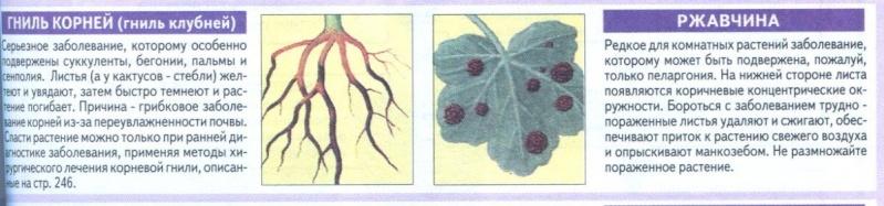 Болезни комнатных растений 91lkfy10
